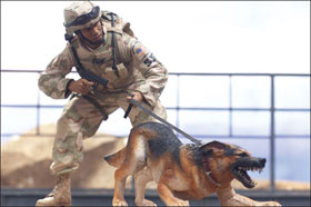 McFarlane's Military Action Figure - Series 3 Air Force Security Forces K9 Handler - Air Force Action Figure